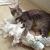 ネコがトイレットペーパーを食べた?!どうしたらいい?どのくらいで排泄する?
