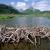 世界最大のビーバーダムを擁するウッド・バッファロー国立公園。動物界の建築家は洪水の原因か?