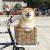 柴犬まるのインスタフォロワー250万人越え!かわいい動画で癒されよう!TIME誌など世界から注目される三重県観光大使をチェック!