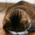 11月22日朝6時 福島で震度5弱!津波警報発令。変わる報道。あの悲劇を二度と繰り返してはならない!福島地震TV放送をライブ配信中!
