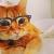 ネコは物理法則を理解している!やはり天才だった!!